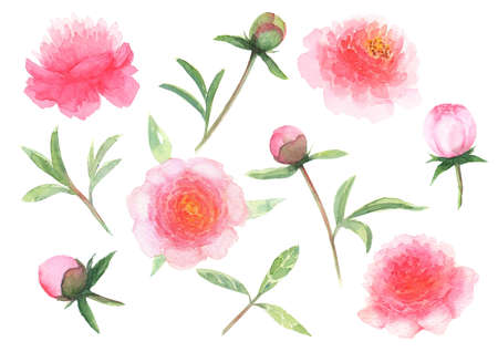 Watercolor pink peony flowers, leaves, buds set isolated on white background. Watercolor hand drawn floral spring botanical illustration. Print for textile, fabric, wallpaper, wrapping paper design. 写真素材