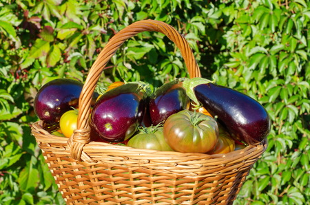 princes street: Basket of eggplants and tomatoes outdoors