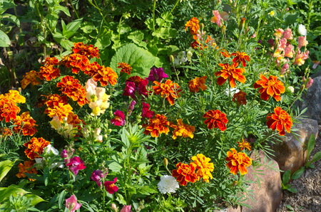 Flowerbed with bright decorative Flowers
