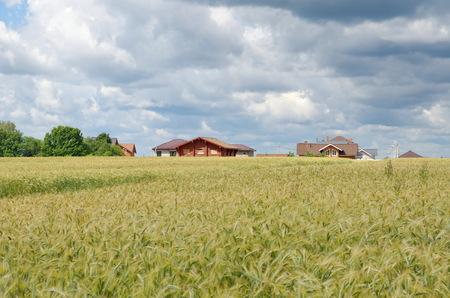 Rye field on the background of rural houses in the summer Sunny day Stock Photo