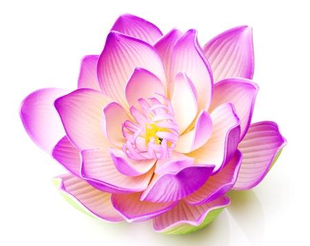 lirio de agua: Flor de loto