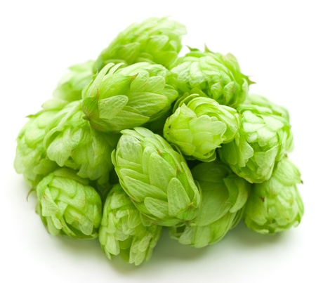 Hop isolated on a white background  photo