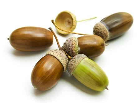 Beautiful acorns isolated on a white background.  photo