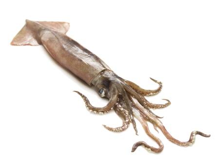 calamar: Niza Calamar fresco aisladas sobre fondo blanco