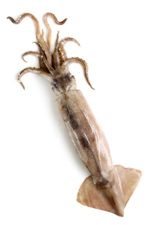 feeler: nice fresh squid isolated on white background  Stock Photo