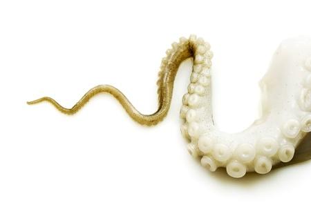 octopus: Tentakels van octopus Stockfoto