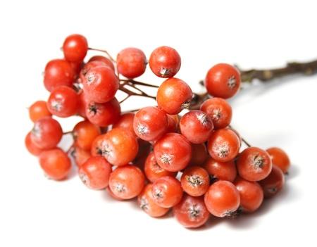 bunchy: Rowan berry grape isolated on white