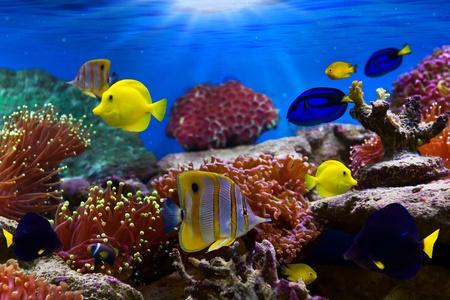 pez pecera: Los arrecifes de coral y peces tropicales en la luz del sol