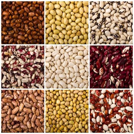 indian bean: Beans
