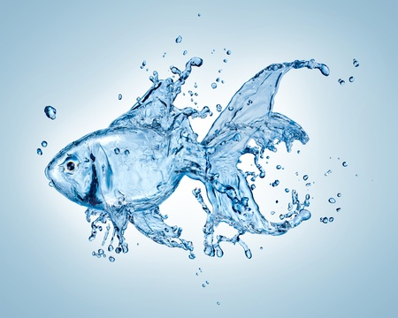 Water goldfish photo