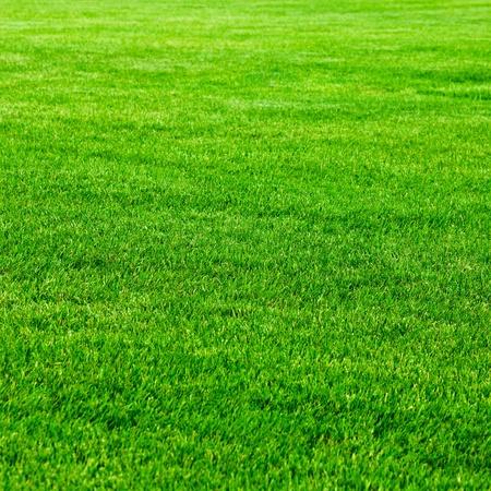 blade of grass: Green grass background