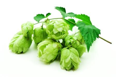 hop cone: hop Stock Photo