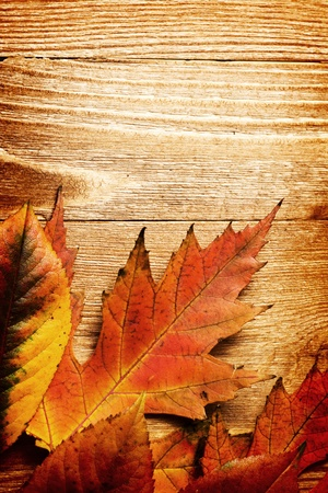 autumn background with colored leaves on wooden board photo