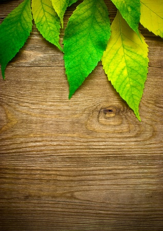 background design: Autumn Leaves over wood background.With copy space