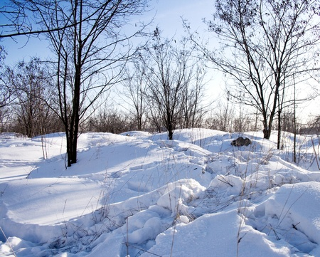 snowscape: beautiful winter landscape