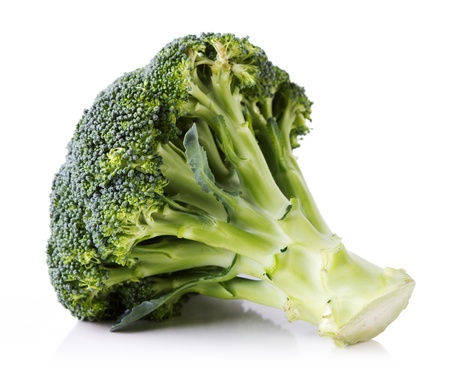 Fresh broccoli on white with soft shadow Stock Photo - 11316487