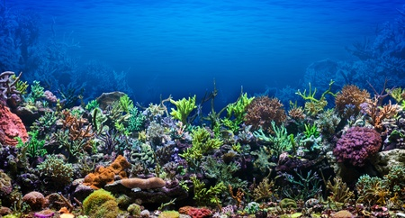 corales marinos: Arrecifes de Coral