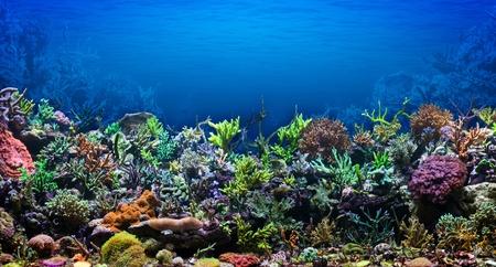 marine coral: Coral Reef