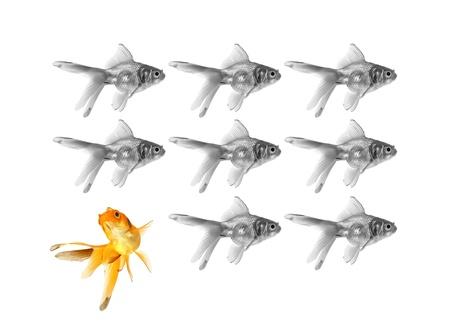 goldfish showing individuality Stock Photo - 12464567