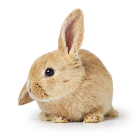 rodent: Cute easter rabbit Stock Photo