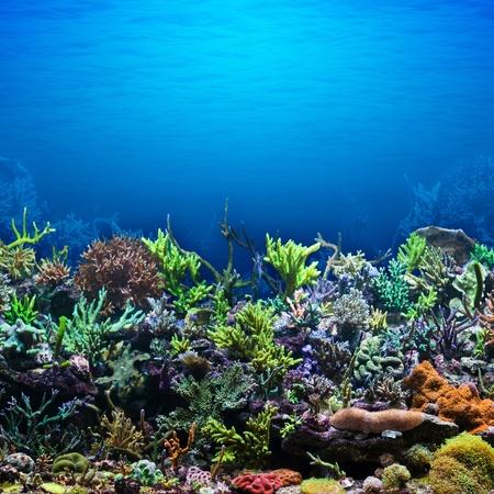 coral reef: Coral Reef
