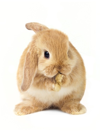 Cute easter rabbit photo