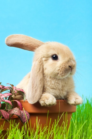 baby Easter bunny on spring green grass photo