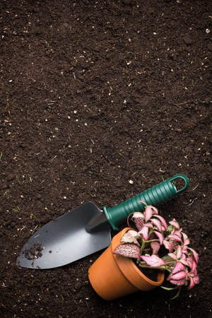 Close-up of the organic soil, spade and flower in pot photo