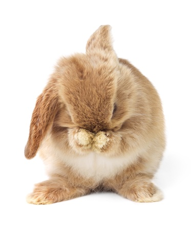 rodents: Cute easter rabbit Stock Photo