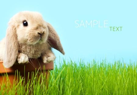 young rabbit: bébé lapin de Pâques sur l'herbe verte du printemps Banque d'images