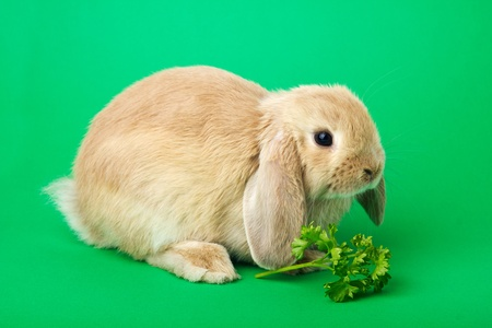 rabbit on a green background Stock Photo - 13515652