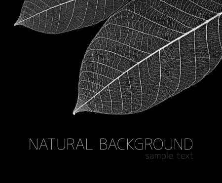 leaves, macro on black photo