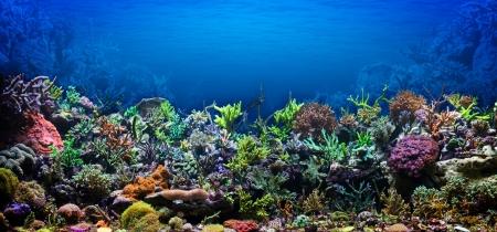 corallo rosso: Barriera corallina