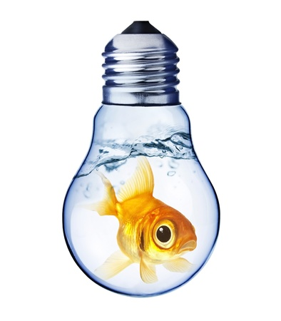 Goldfish trapped in a light bulb  photo