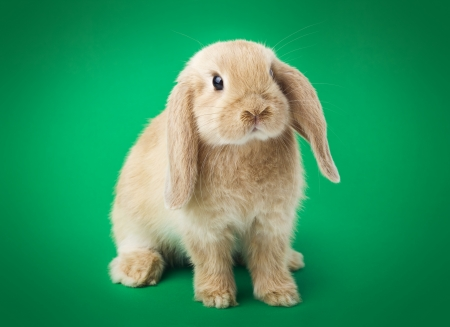 konijn op een groene achtergrond