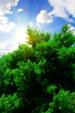 shining through: Sun shining through tree
