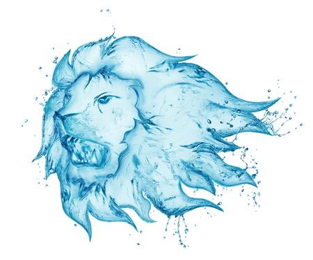 of lions: le�n salpicaduras de agua aislados en fondo blanco Foto de archivo