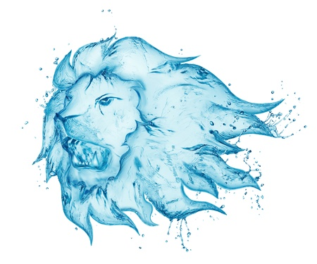 white lion: water splash lion isolated on white background Stock Photo