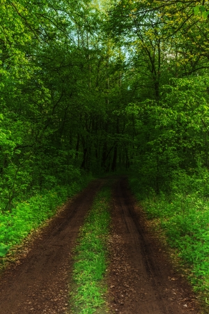 dark forest: dark forest and a road Stock Photo