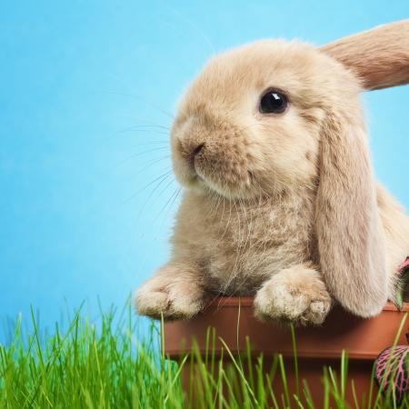Baby konijn in het gras