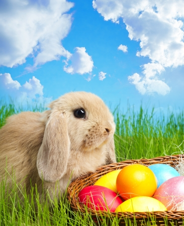 Little Easter bunny and Easter eggs on green grass photo