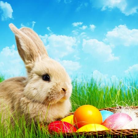 Conejito de Pascua y huevos de Pascua en la hierba verde