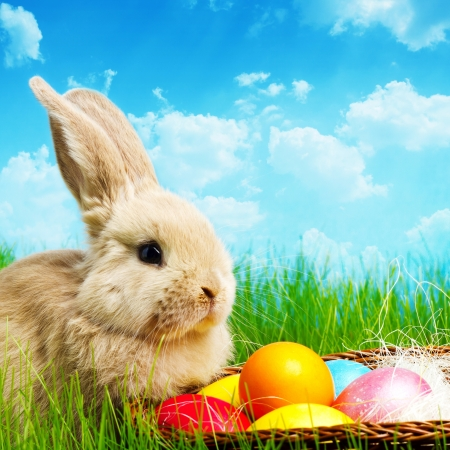 bunny rabbit:  Little Easter bunny and Easter eggs on green grass