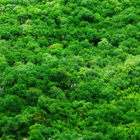 above view: Aerial shot of tree tops - abstract texture background  Stock Photo