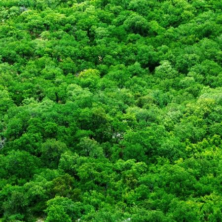 Letecký snímek z korun stromů - abstraktní textury na pozadí