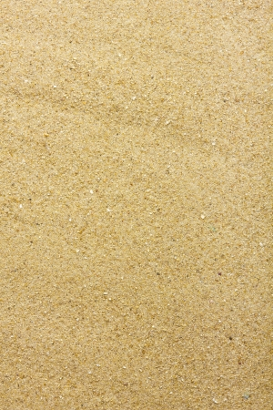 sand grains: Sandy beach background. Detailed sand texture. Top view