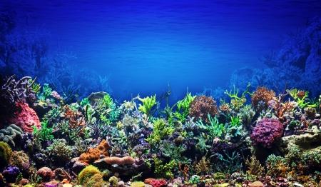 underwater ocean: Coral Reef
