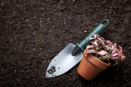 Pflanzen von Blumen in Blumenerde, mit Garten-Tools