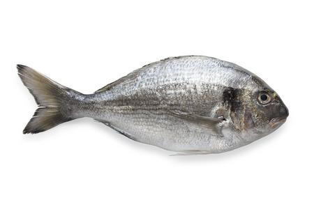 daurade: Dorado fish isolated on white background with path