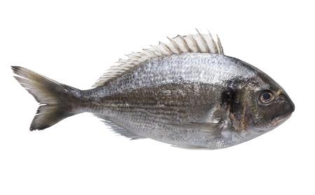 Dorado fish isolated on white background  photo